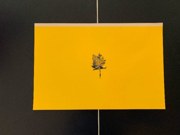 Apen Tree Print - Conner Youngblood
